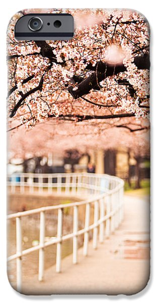 Jogging iPhone Cases - Canopy of Cherry Blossoms Over a Walking Trail iPhone Case by Susan  Schmitz