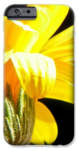 Canopy of Petals iPhone Case by KAREN WILES