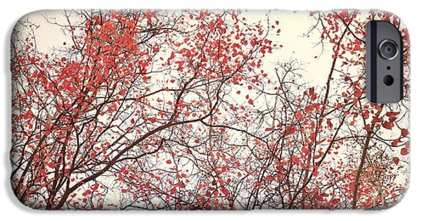 Fineart iPhone Cases - canopy trees II iPhone Case by Priska Wettstein