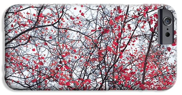 Fineart iPhone Cases - Canopy Trees iPhone Case by Priska Wettstein