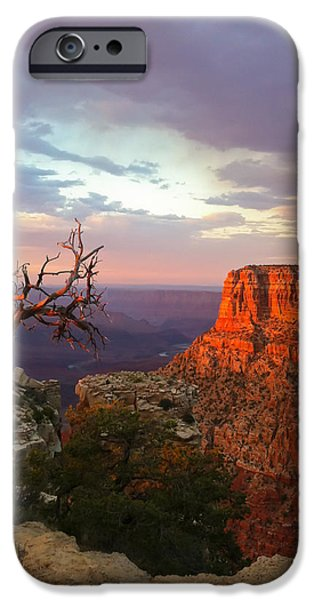Grand Canyon iPhone Cases - Canyon Rim Tree iPhone Case by Heidi Smith