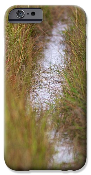 Mashpee iPhone Cases - Cape Cod Marsh iPhone Case by Allan Morrison