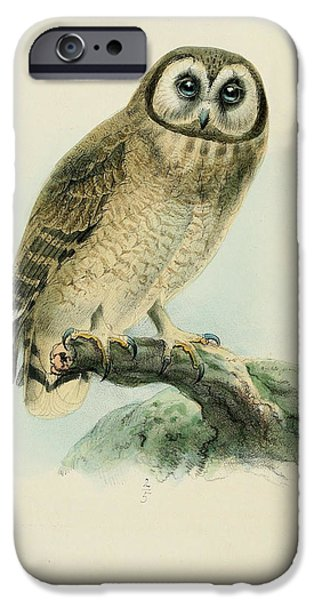 Colored Owls iPhone Cases - Cape Eared Owl iPhone Case by J G Keulemans