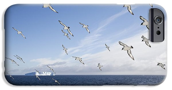 Sea Birds iPhone Cases - Cape Petrels Flying Antarctic Peninsula iPhone Case by Martin Hale