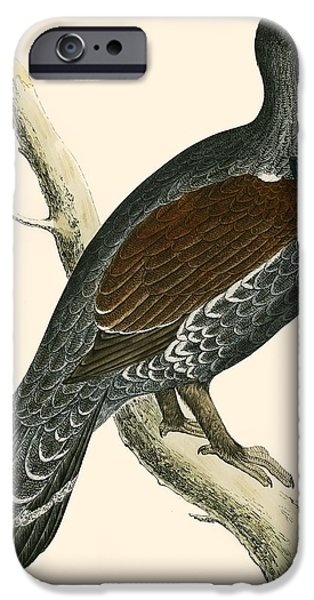 Hunting Bird iPhone Cases - Capercaillie iPhone Case by Beverley R. Morris
