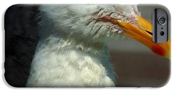 Sea Birds iPhone Cases - Capt. S. G. Bombardier iPhone Case by Lorenzo Williams