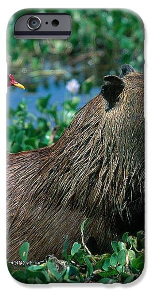 Capybara and Jacana iPhone Case by Francois Gohier