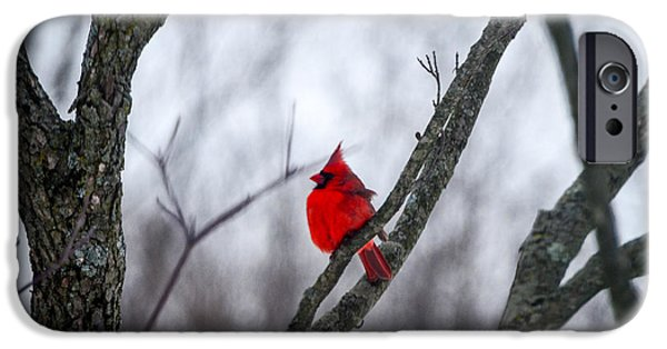 Snow iPhone Cases - Cardinal In A Snow Storm iPhone Case by Mary Carol Story