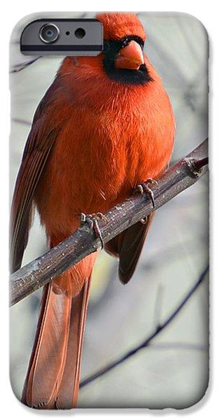 Cardinal in a Tree iPhone Case by Susan Leggett