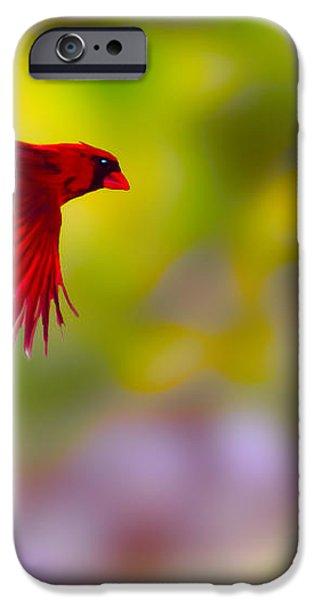 Cardinal in flight iPhone Case by Dan Friend