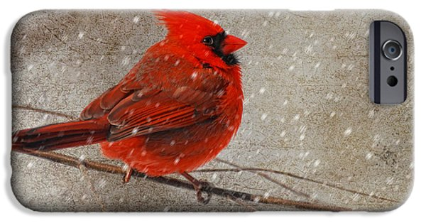 White Christmas iPhone Cases - Cardinal in Snow iPhone Case by Lois Bryan