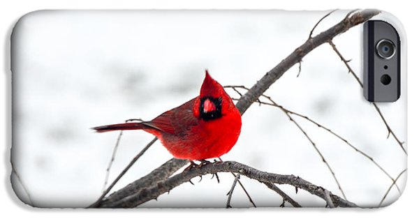 Winter Storm iPhone Cases - Cardinal On A Branch  iPhone Case by Mary Carol Story