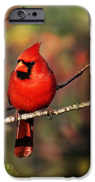 Cardinal Territory iPhone Case by Christina Rollo