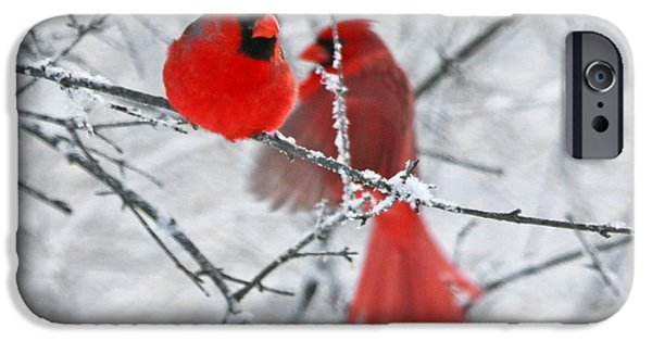 Recently Sold -  - Snow iPhone Cases - Cardinals  7309 iPhone Case by Jack Schultz