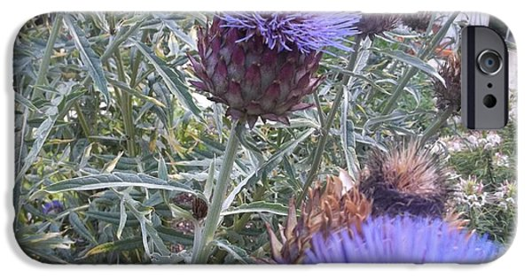 Print Jewelry iPhone Cases - Cardoon Flowers And Bee iPhone Case by Anne Foster