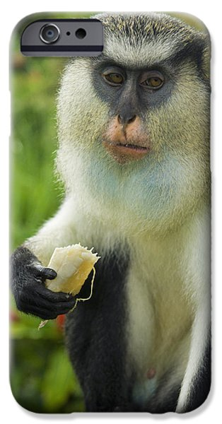 Nation iPhone Cases - Caribbean, Mona Monkey At Grand Etang iPhone Case by Chris Parker