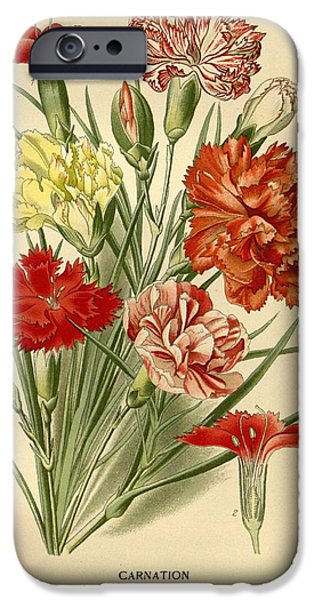 Business Drawings iPhone Cases - Carnations iPhone Case by Philip Ralley