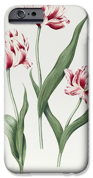 Botanical Paintings iPhone Cases - Carnival de Nice iPhone Case by Sally Crosthwaite