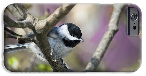 Indiana Springs iPhone Cases - Carolina Chickadee - D008966 iPhone Case by Daniel Dempster