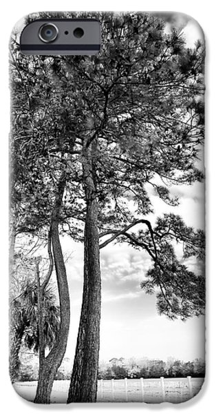 Historic Site iPhone Cases - Carolina Trees iPhone Case by John Rizzuto