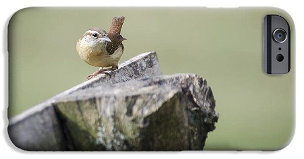 Wren iPhone Cases - Carolina Wren iPhone Case by Heather Applegate
