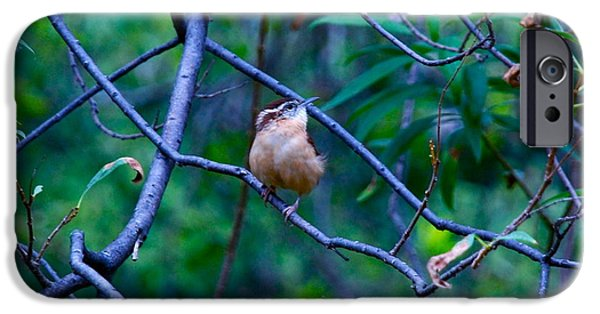 Scoot iPhone Cases - Carolina Wren iPhone Case by M E Wood