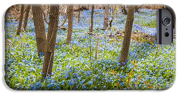 Floral Photographs iPhone Cases - Carpet of blue flowers in spring forest iPhone Case by Elena Elisseeva