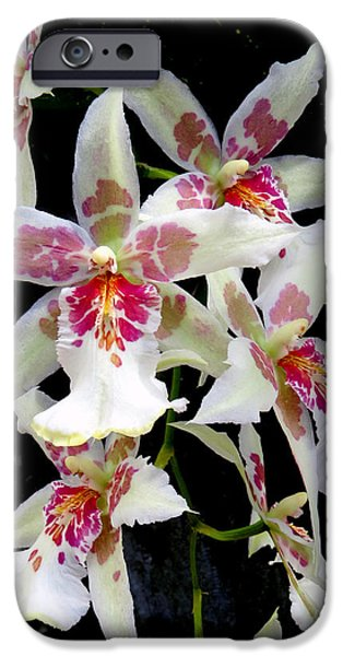 Plant iPhone Cases - Cascading Cymbidiums  iPhone Case by Dawn Gari