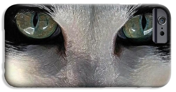 Photos Of Cats iPhone Cases - Casey Eyes iPhone Case by Dale   Ford