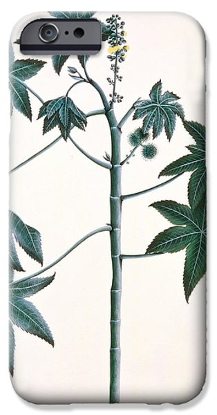 Ink On Paper iPhone Cases - Castor Oil Plant iPhone Case by Indian School