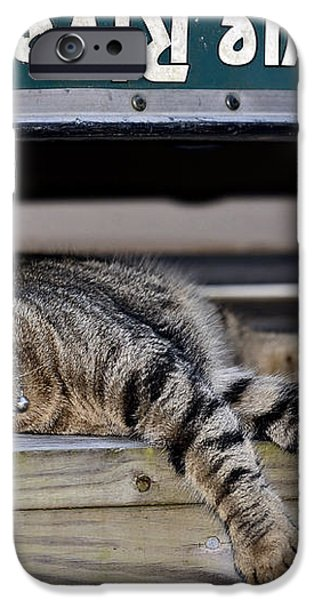 Cat and a Canoe iPhone Case by Susan Leggett