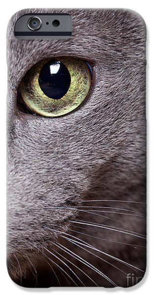 Gray Hair iPhone Cases - Cat Eye iPhone Case by Nailia Schwarz