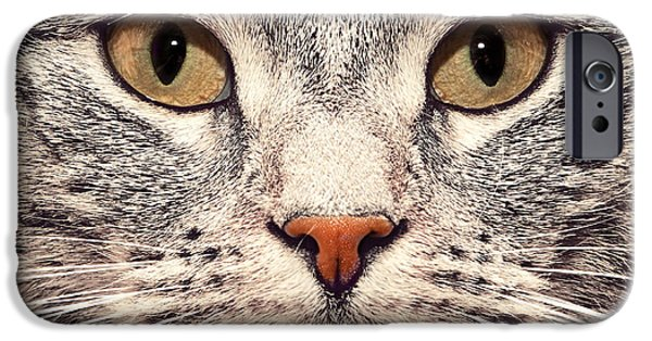 Gray Hair iPhone Cases - Cat face close up portrait iPhone Case by Michal Bednarek