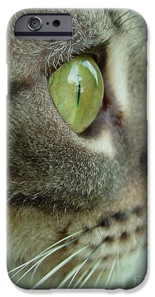 American Shorthair iPhone Cases - Cat Face Profile iPhone Case by Amy Cicconi
