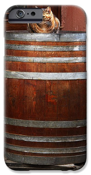 Cat Guarding a Wine Barrel in Alsace iPhone Case by Greg Matchick