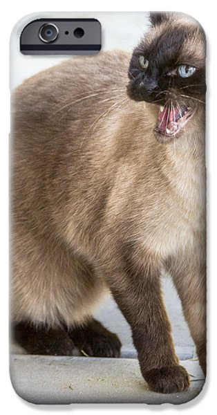 Pen And Ink Photographs iPhone Cases - Cat Hiss iPhone Case by Laura L Leatherwood