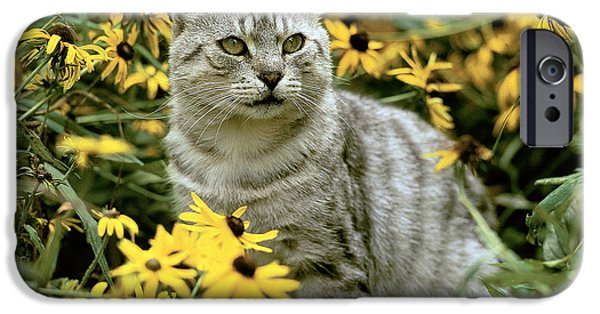 Gray Hair iPhone Cases - Cat In Flowers iPhone Case by Hans Reinhard/Okapia