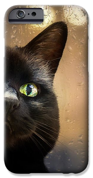 Cat in the window iPhone Case by Bob Orsillo