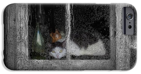 Rainy Day iPhone Cases - Cat In The Window iPhone Case by Jack Zulli