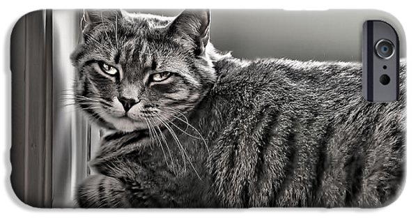 Ledge iPhone Cases - Cat in Window iPhone Case by Maria Coulson