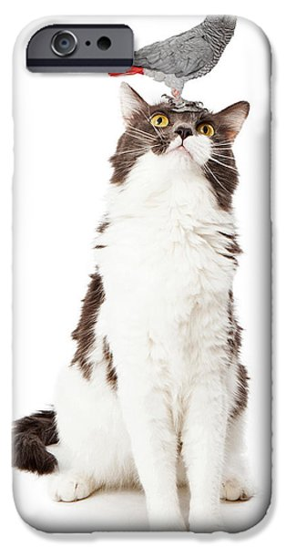 Gray Hair iPhone Cases - Cat Looking Up at a Bird iPhone Case by Susan  Schmitz