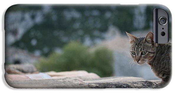 Pictures Of Cats Photographs iPhone Cases - Cat on a Hot Terracotta Roof iPhone Case by Jason Liebman