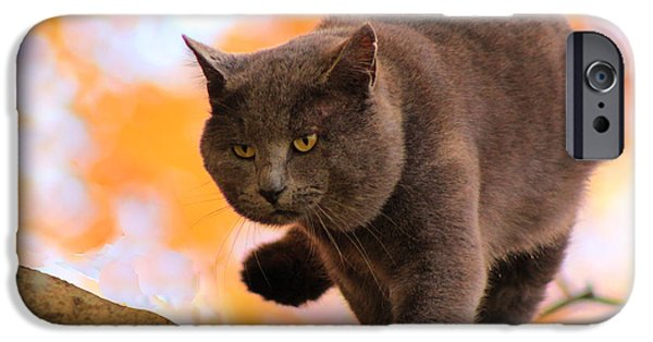 Gray Hair Digital Art iPhone Cases - Cat On The Prowl iPhone Case by Lorna Rogers Photography