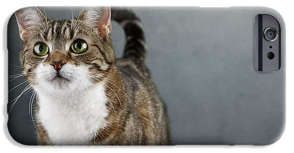Housecat iPhone Cases - Cat Portrait iPhone Case by Nailia Schwarz