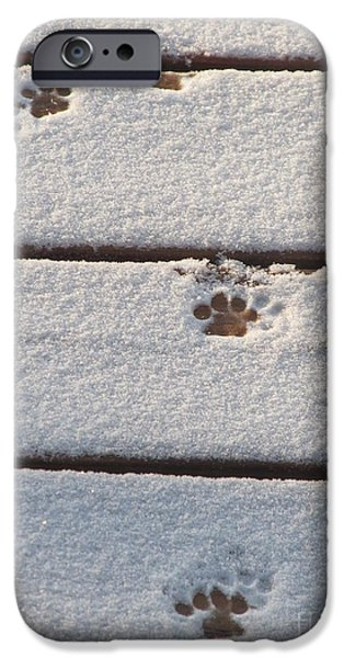 Snow Pastels iPhone Cases - Cat Tracks iPhone Case by Tracy L Teeter