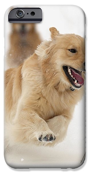 Catch Me If You Can iPhone Case by Vic Harris