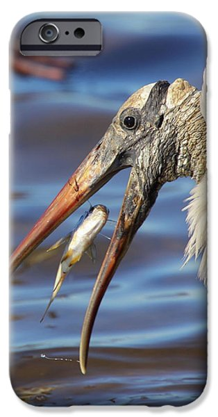 Stork iPhone Cases - Catch Of The Day iPhone Case by Bruce J Robinson
