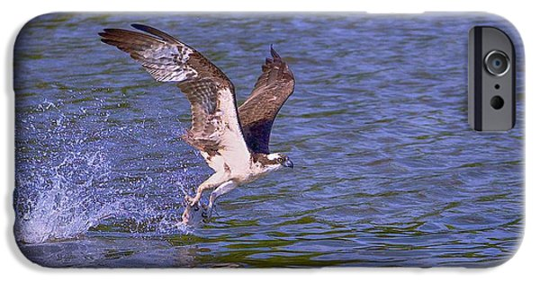 Flight iPhone Cases - Catch of the day  iPhone Case by Mike Yeatts