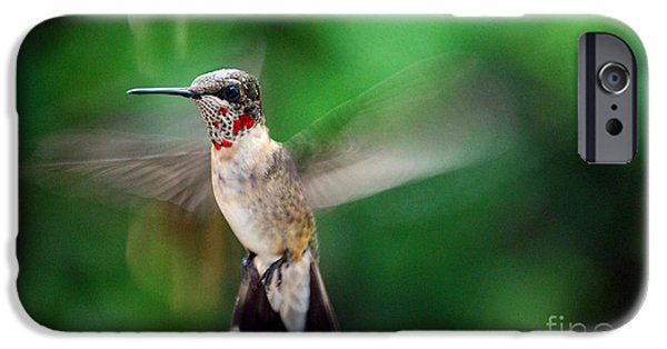 Photos Of Birds iPhone Cases - Catch The Buzz iPhone Case by Skip Willits