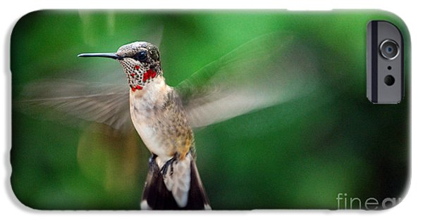 Birds iPhone Cases - Catch The Buzz iPhone Case by Skip Willits